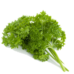 Parsley Curley